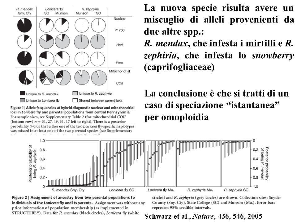 Schwarz et al., Nature, 436, 546, 2005 La nuova specie risulta avere un miscuglio di alleli provenienti da due altre spp.: R. mendax, che infesta i mi