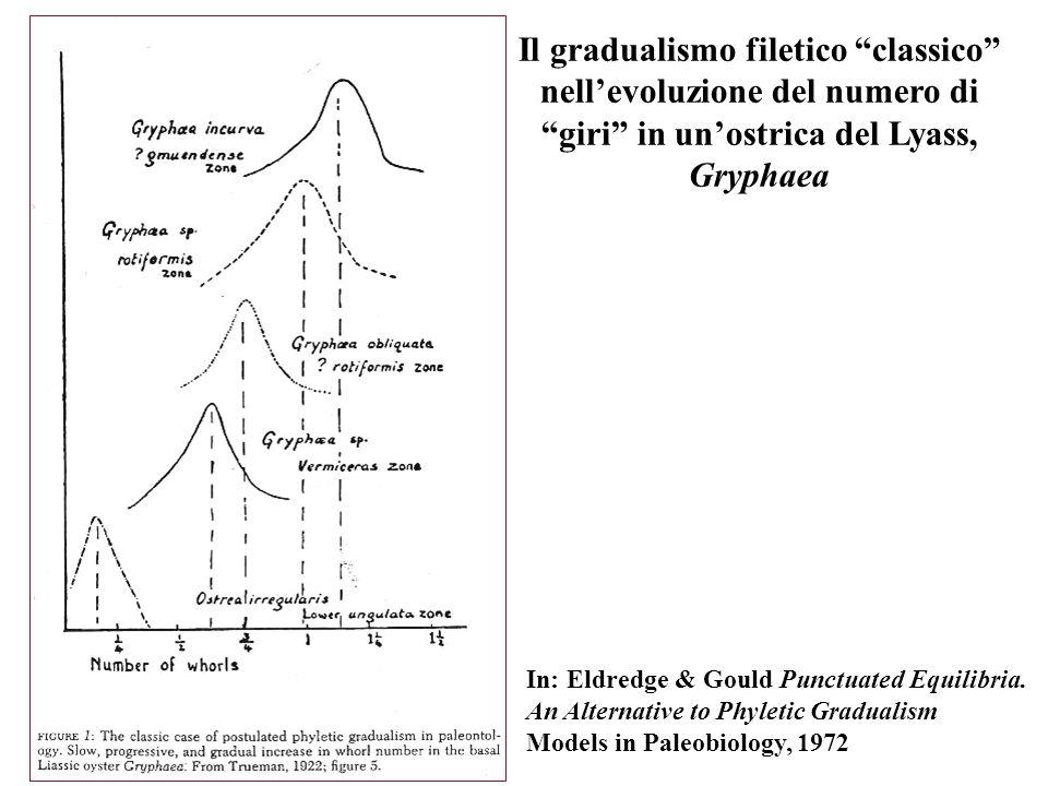 Il gradualismo filetico classico nellevoluzione del numero di giri in unostrica del Lyass, Gryphaea In: Eldredge & Gould Punctuated Equilibria. An Alt