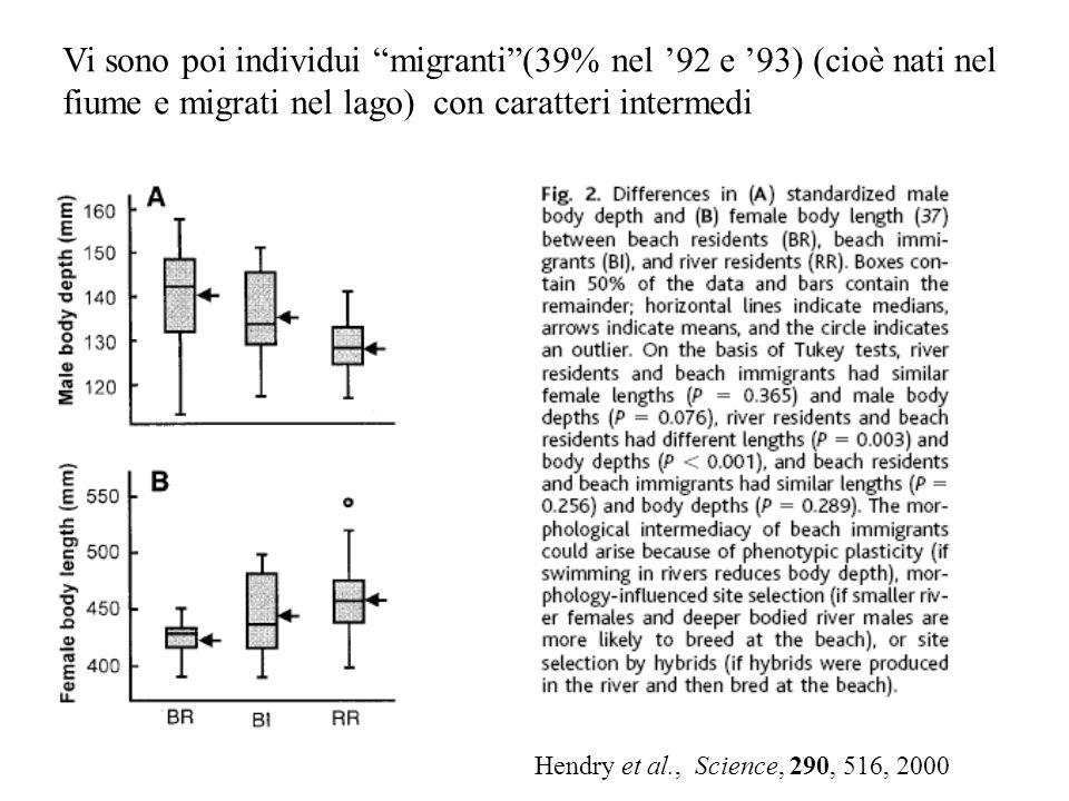 Vi sono poi individui migranti(39% nel 92 e 93) (cioè nati nel fiume e migrati nel lago) con caratteri intermedi Hendry et al., Science, 290, 516, 200