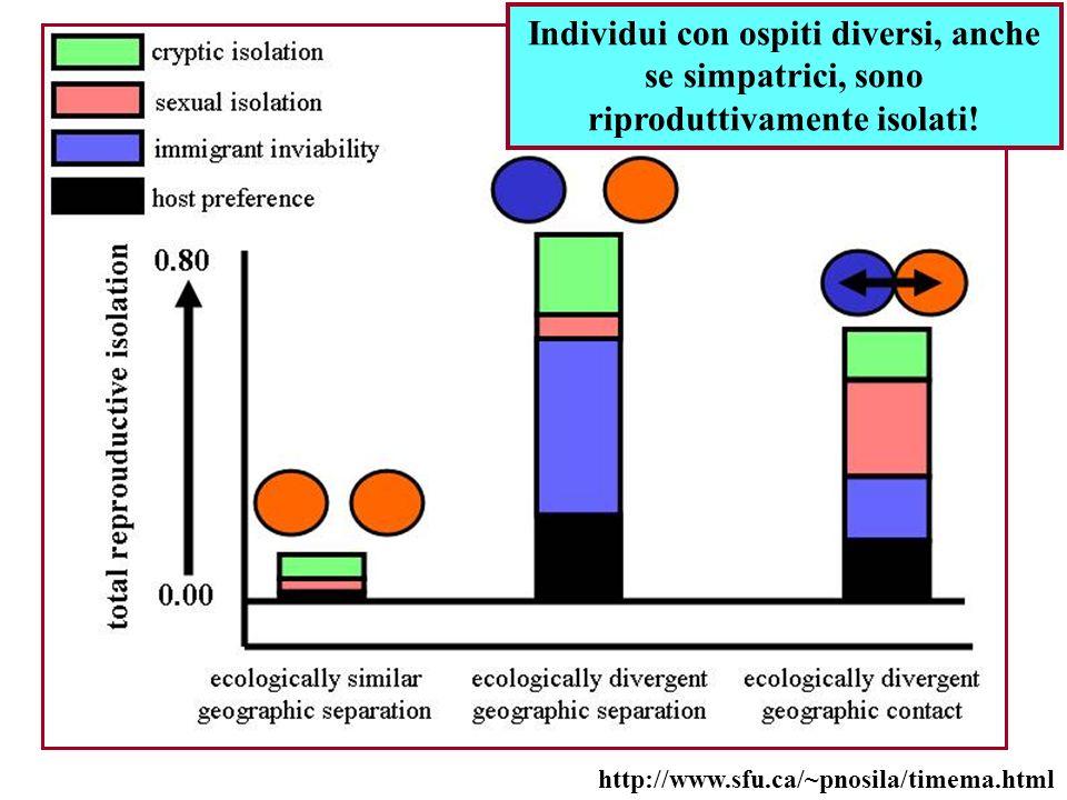 http://www.sfu.ca/~pnosila/timema.html Individui con ospiti diversi, anche se simpatrici, sono riproduttivamente isolati!
