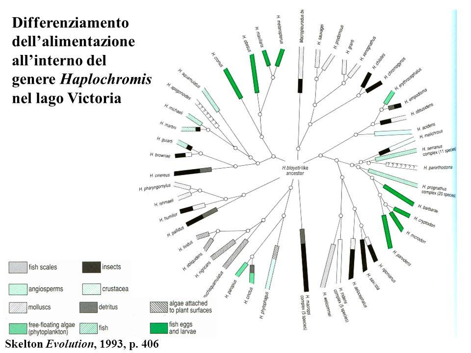Differenziamento dellalimentazione allinterno del genere Haplochromis nel lago Victoria Skelton Evolution, 1993, p. 406