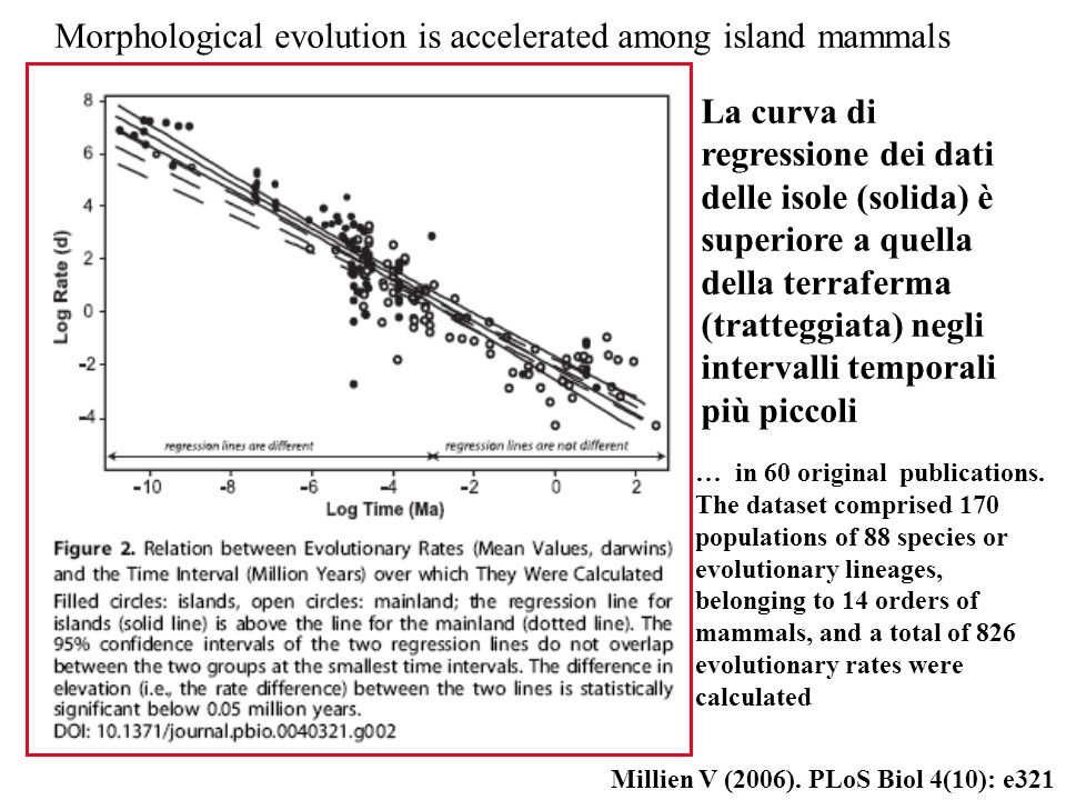 Millien V (2006). PLoS Biol 4(10): e321 Morphological evolution is accelerated among island mammals La curva di regressione dei dati delle isole (soli