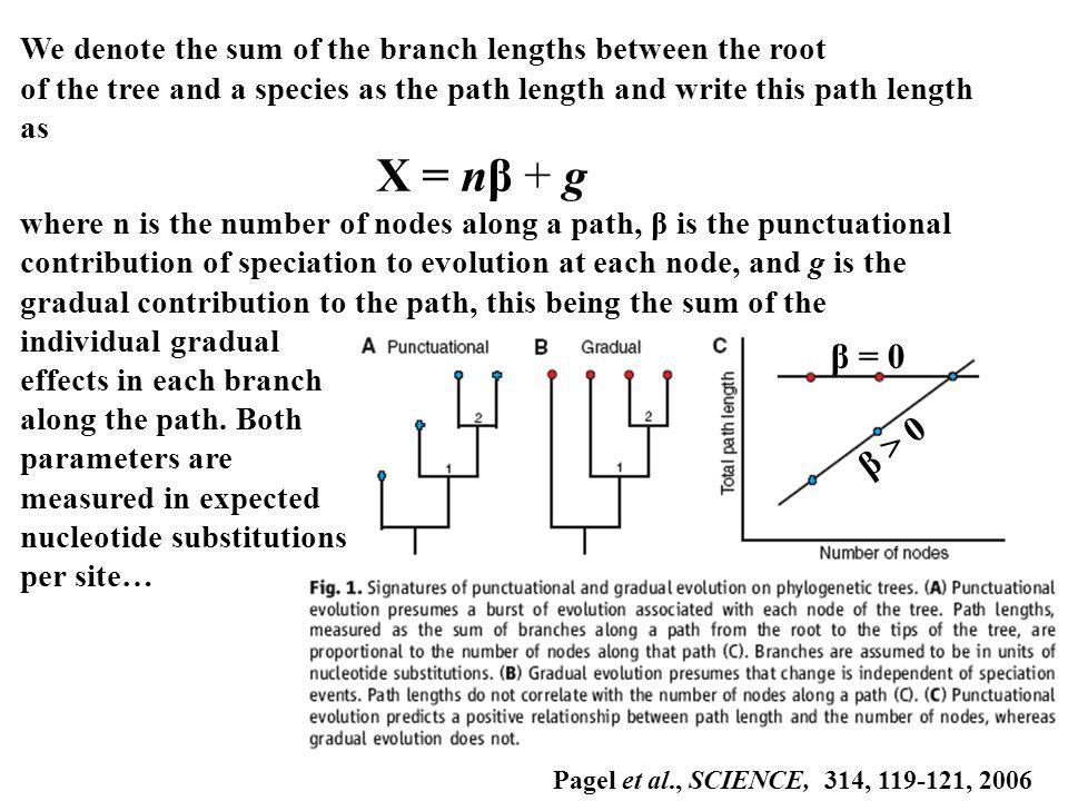 β = 0 β > 0 We denote the sum of the branch lengths between the root of the tree and a species as the path length and write this path length as X = nβ