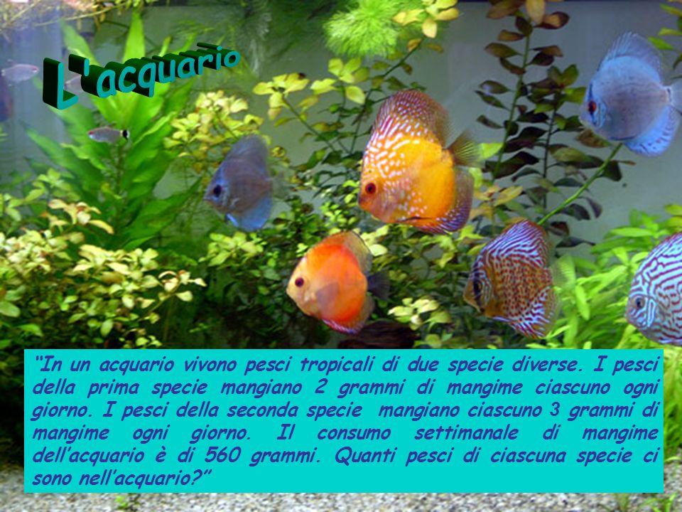 In un acquario vivono pesci tropicali di due specie diverse. I pesci della prima specie mangiano 2 grammi di mangime ciascuno ogni giorno. I pesci del