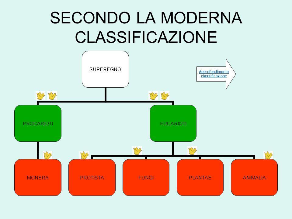 SECONDO LA MODERNA CLASSIFICAZIONE Approfondimento classificazione
