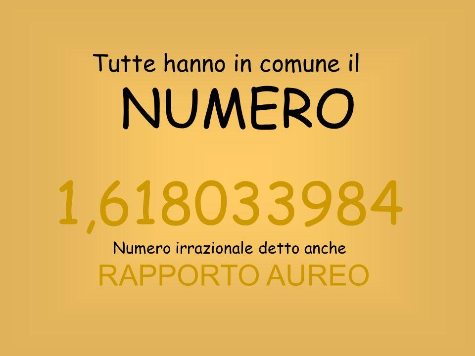 Tutte hanno in comune il NUMERO 1,618033984 Numero irrazionale detto anche RAPPORTO AUREO