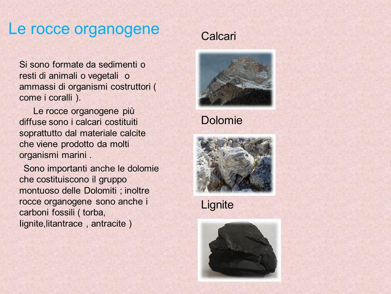 Le rocce organogene Si sono formate da sedimenti o resti di animali o vegetali o ammassi di organismi costruttori ( come i coralli ). Le rocce organog