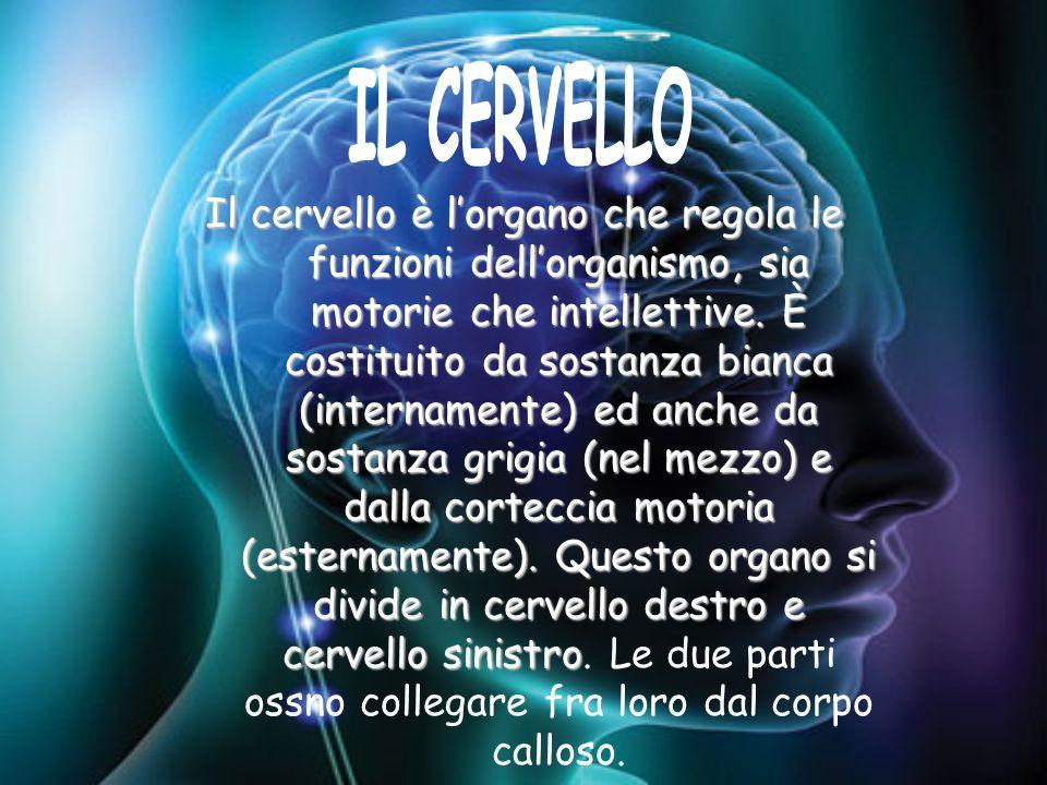 Il cervello è lorgano che regola le funzioni dellorganismo, sia motorie che intellettive. È costituito da sostanza bianca (internamente) ed anche da s