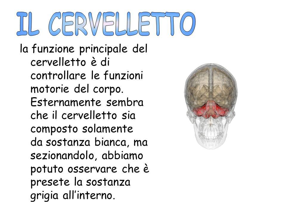 la funzione principale del cervelletto è di controllare le funzioni motorie del corpo. Esternamente sembra che il cervelletto sia composto solamente d