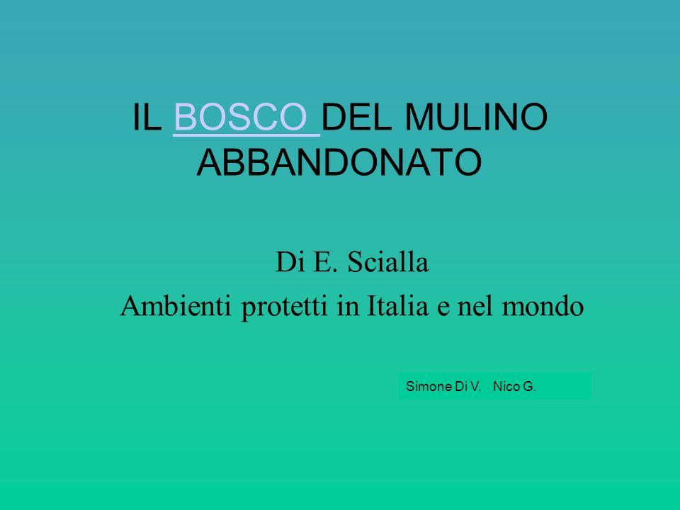 Di E. Scialla Ambienti protetti in Italia e nel mondo IL BOSCO DEL MULINO ABBANDONATOBOSCO Simone Di V. Nico G.
