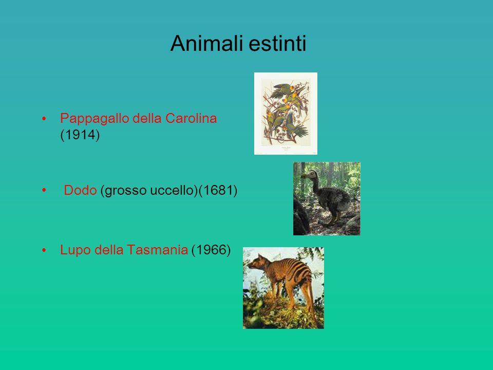 Animali estinti Pappagallo della Carolina (1914) Dodo (grosso uccello)(1681) Lupo della Tasmania (1966)
