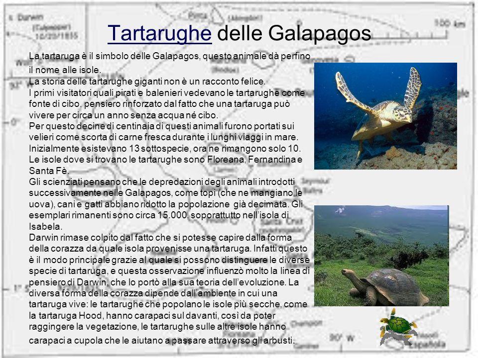 TartarugheTartarughe delle Galapagos La tartaruga è il simbolo delle Galapagos, questo animale dà perfino il nome alle isole. La storia delle tartarug