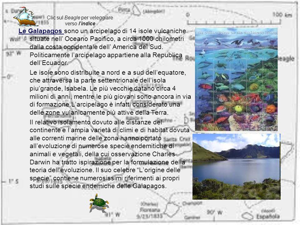 Le Galapagos Le Galapagos sono un arcipelago di 14 isole vulcaniche situate nell Oceano Pacifico, a circa 1000 chilometri dalla costa occidentale dell