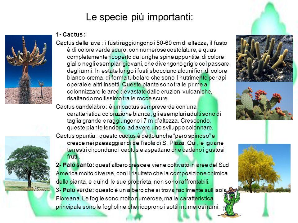 Le specie più importanti: 1- Cactus : Cactus della lava : i fusti raggiungono i 50-60 cm di altezza, il fusto è di colore verde scuro, con numerose co