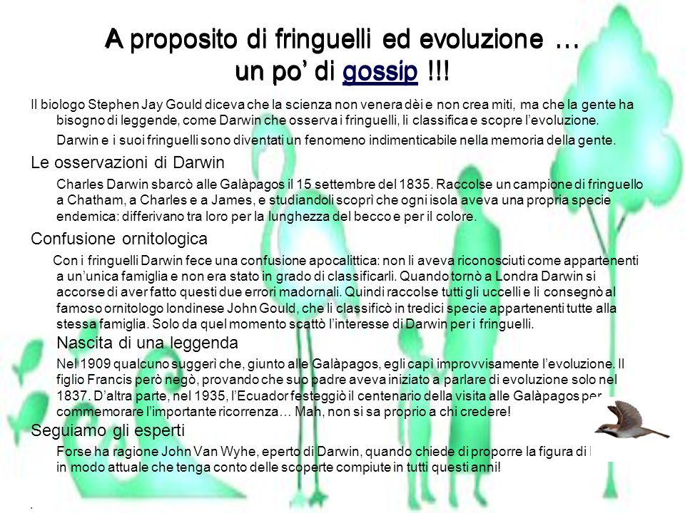 A proposito di fringuelli ed evoluzione … un po di gossip !!!gossip A proposito di fringuelli ed evoluzione … un po di gossip !!!gossip Il biologo Ste