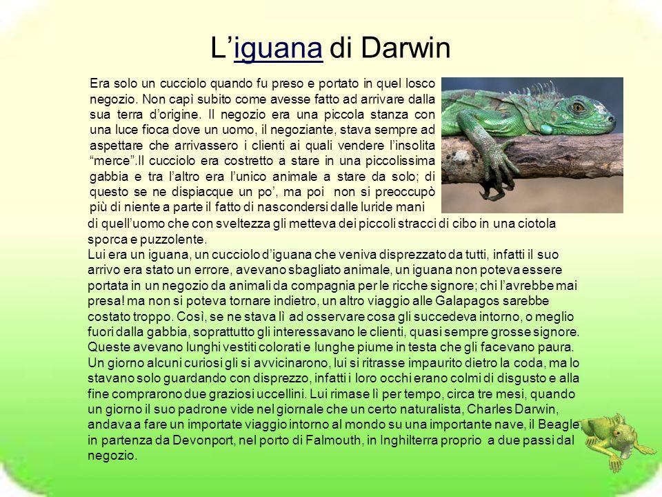Liguana di Darwiniguana Era solo un cucciolo quando fu preso e portato in quel losco negozio. Non capì subito come avesse fatto ad arrivare dalla sua