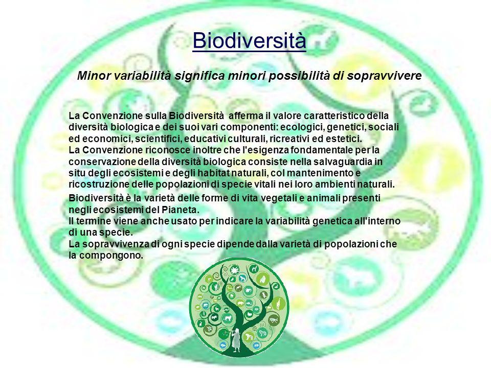 Biodiversità Biodiversità Minor variabilità significa minori possibilità di sopravvivere La Convenzione sulla Biodiversità afferma il valore caratteri