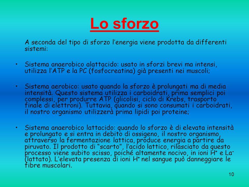 10 Lo sforzo A seconda del tipo di sforzo lenergia viene prodotta da differenti sistemi: Sistema anaerobico alattacido: usato in sforzi brevi ma inten