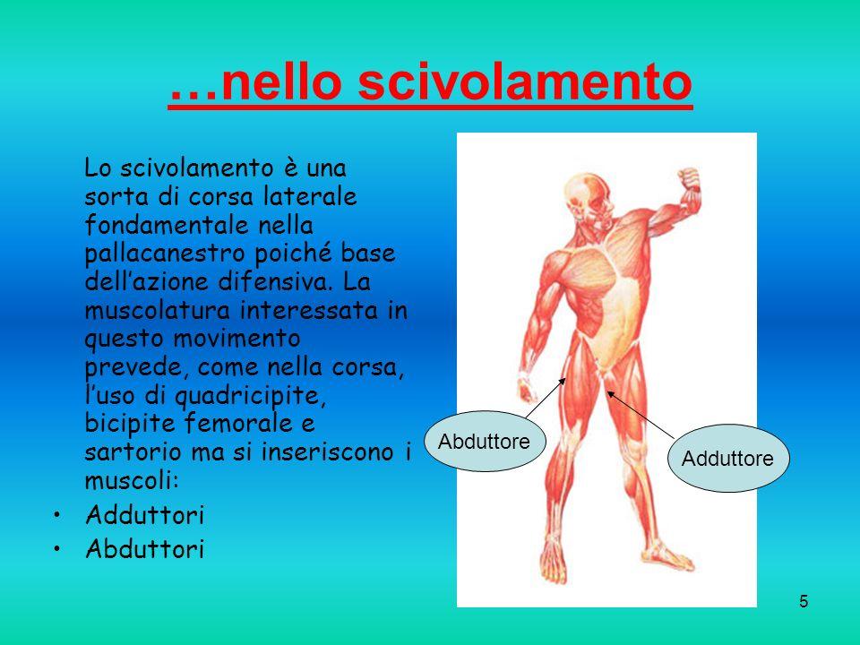 6 …nel tiro Il tiro è un movimento armonico e complesso, che comprende la fase di caricamento (nella quale si impiegano muscoli degli arti inferiori) e la fase di rilascio (muscoli degli arti superiori).