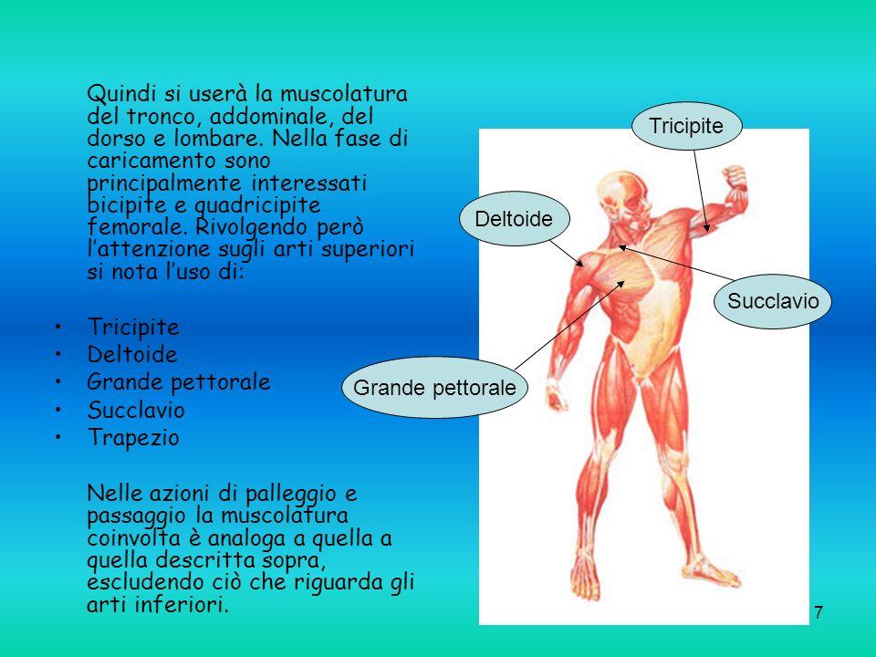 7 Quindi si userà la muscolatura del tronco, addominale, del dorso e lombare. Nella fase di caricamento sono principalmente interessati bicipite e qua