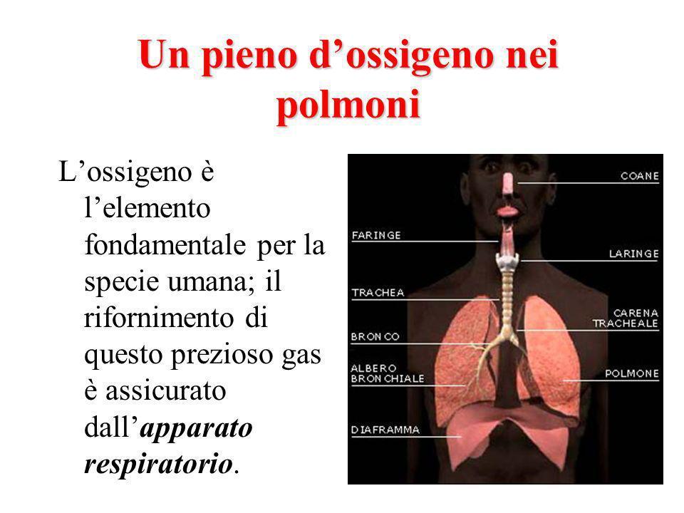 Un pieno dossigeno nei polmoni Lossigeno è lelemento fondamentale per la specie umana; il rifornimento di questo prezioso gas è assicurato dallapparato respiratorio.