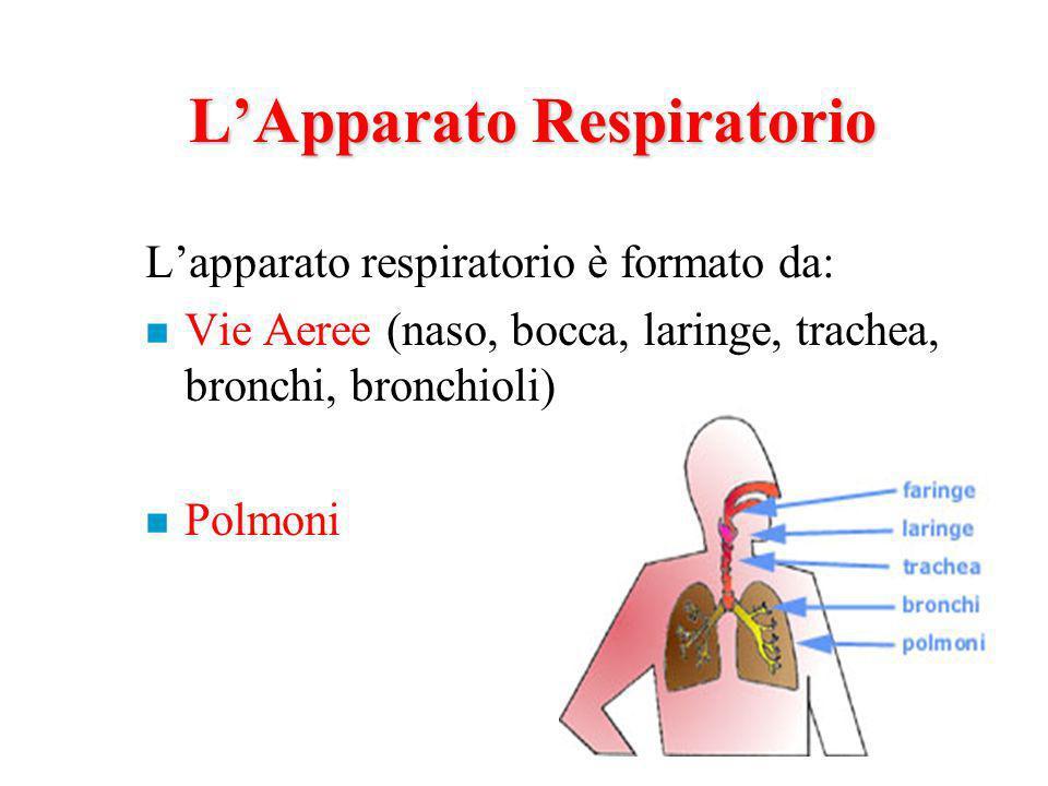 LApparato Respiratorio Lapparato respiratorio è formato da: n Vie Aeree (naso, bocca, laringe, trachea, bronchi, bronchioli) n Polmoni