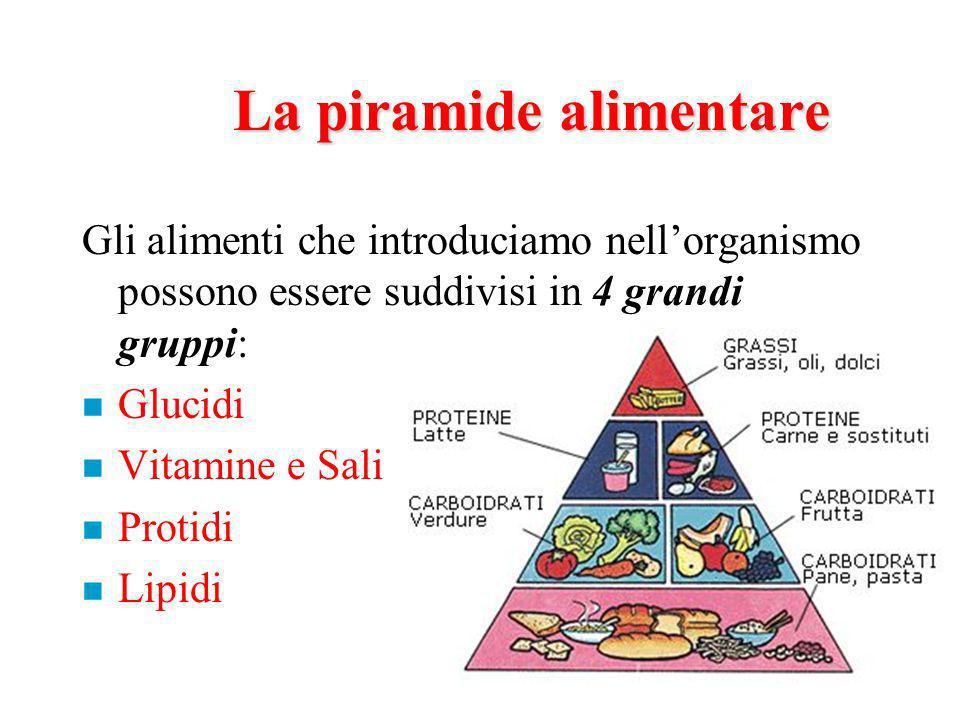 La piramide alimentare Gli alimenti che introduciamo nellorganismo possono essere suddivisi in 4 grandi gruppi: n Glucidi n Vitamine e Sali n Protidi n Lipidi