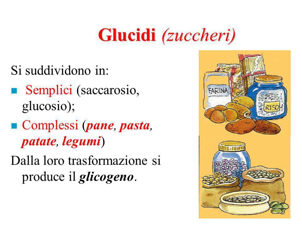 Glucidi (zuccheri) Si suddividono in: n Semplici (saccarosio, glucosio); n Complessi (pane, pasta, patate, legumi) Dalla loro trasformazione si produce il glicogeno.