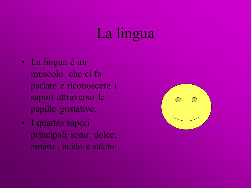 La lingua La lingua è un muscolo che ci fa parlare e riconoscere i sapori attraverso le papille gustative. I quattro sapori principali sono: dolce, am