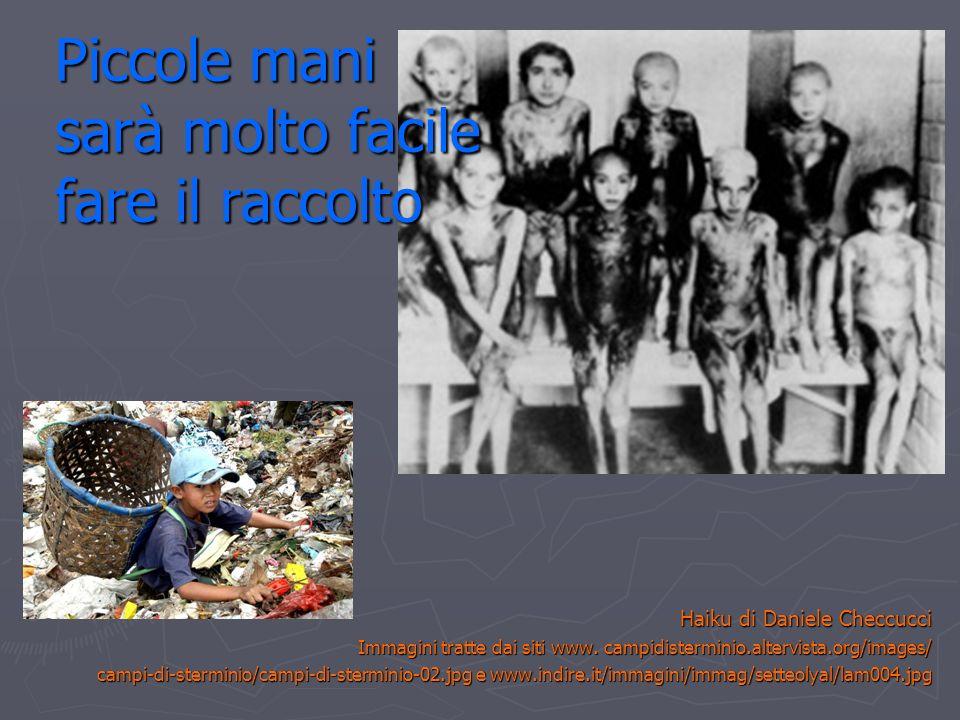 Piccole mani sarà molto facile fare il raccolto Haiku di Daniele Checcucci Immagini tratte dai siti www. campidisterminio.altervista.org/images/ campi