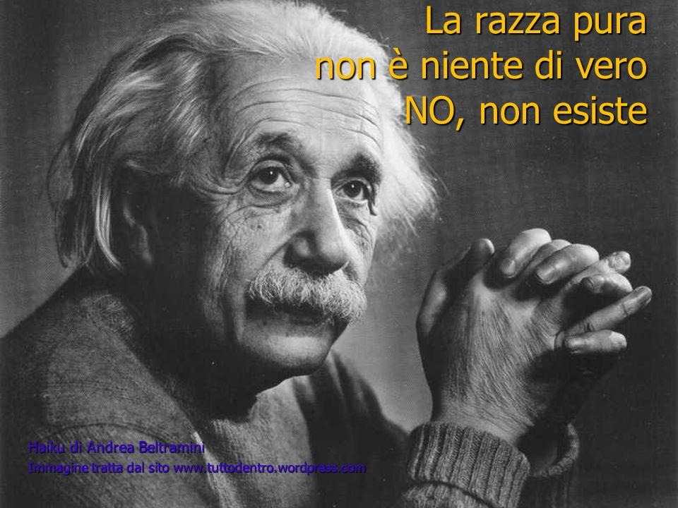 La razza pura non è niente di vero NO, non esiste Haiku di Andrea Beltramini Immagine tratta dal sito www.tuttodentro.wordpress.com