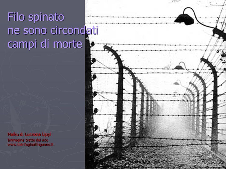 Filo spinato ne sono circondati campi di morte Haiku di Lucrezia Lippi Immagine tratta dal sito www.dalrifugioallinganno.it