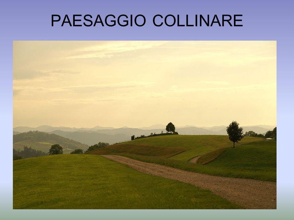 PAESAGGIO COLLINARE