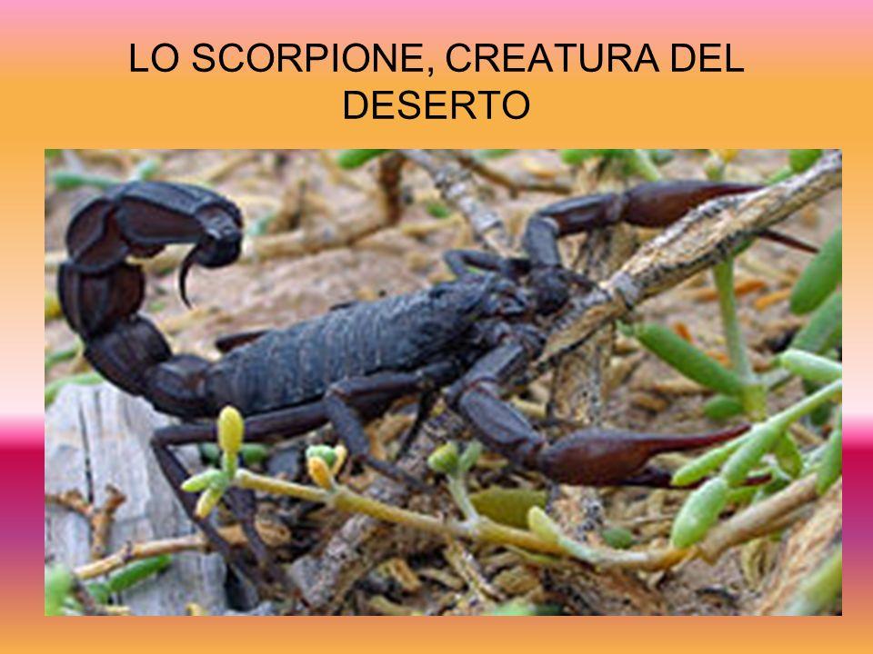 LO SCORPIONE, CREATURA DEL DESERTO