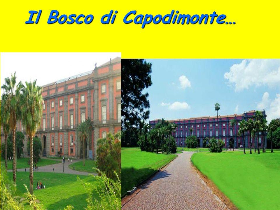 Il Bosco di Capodimonte…