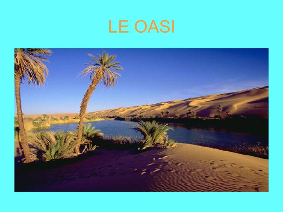 Le oasi Le oasi sono località nel deserto dove si trovano dei palmizi e dei pozzi.