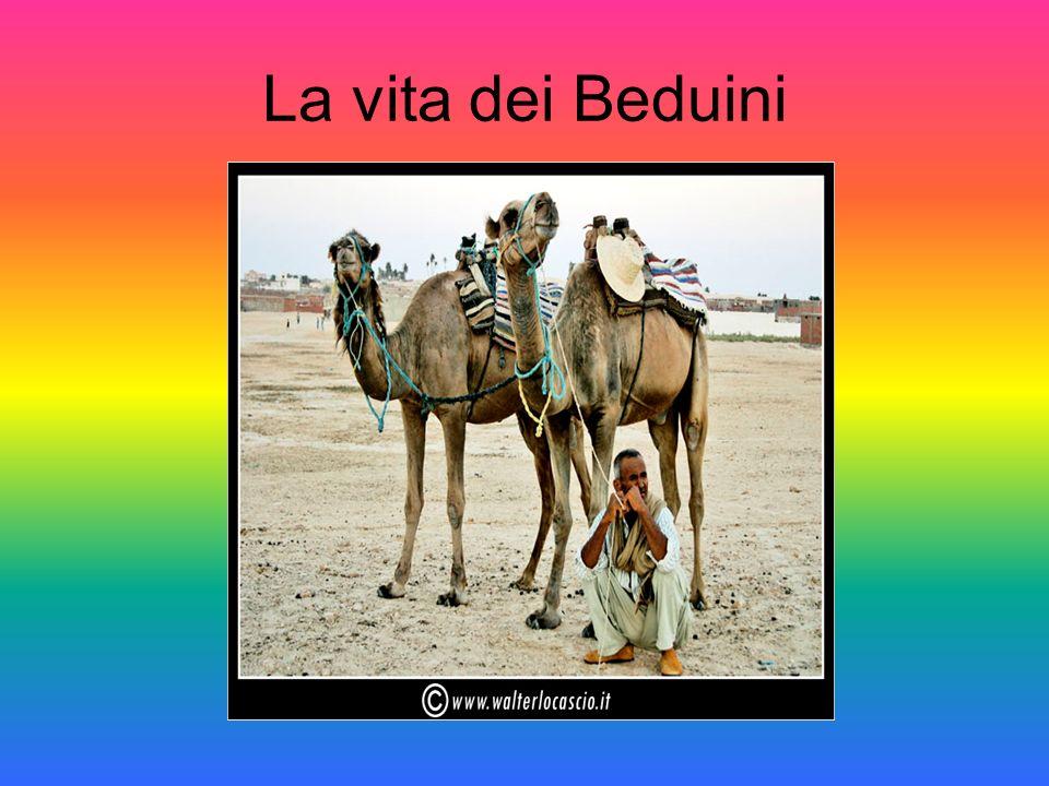 Lo storico Giorgio Cracco ha scritto, riferendosi alla penisola Arabica: I Beduini imparano la difficile arte di sopravvivere nonostante lambiente.