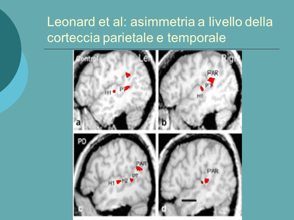 Robichon et al. 2000 non trovarono differenze a livello del planum temporale ma bensì a livello dellopercolo parietale