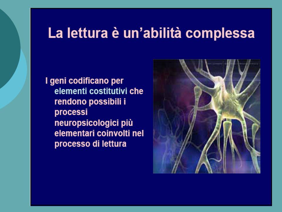 Lemisfero sinistro del cervello umano e le aree corticali relative ai compiti di lettura