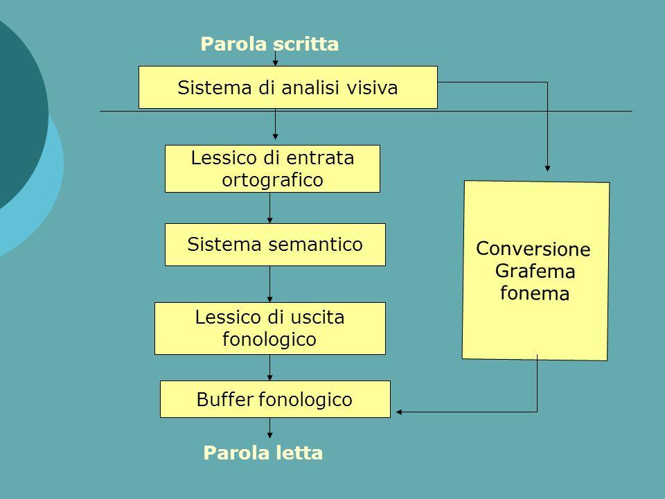 Il MODELLO La neuropsicologia ha prodotto dei modelli che prevedono il frazionamento del processo di lettura in una serie di operazioni cognitive spec