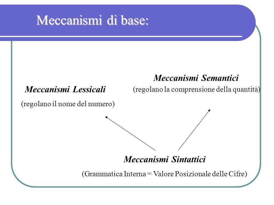 Meccanismi di base: Meccanismi Semantici (regolano la comprensione della quantità) Meccanismi Lessicali (regolano il nome del numero) Meccanismi Sinta
