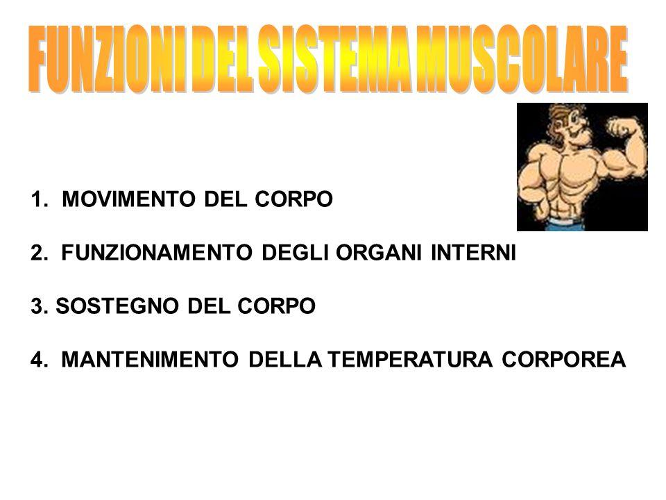 1. MOVIMENTO DEL CORPO 2. FUNZIONAMENTO DEGLI ORGANI INTERNI 3.SOSTEGNO DEL CORPO 4. MANTENIMENTO DELLA TEMPERATURA CORPOREA