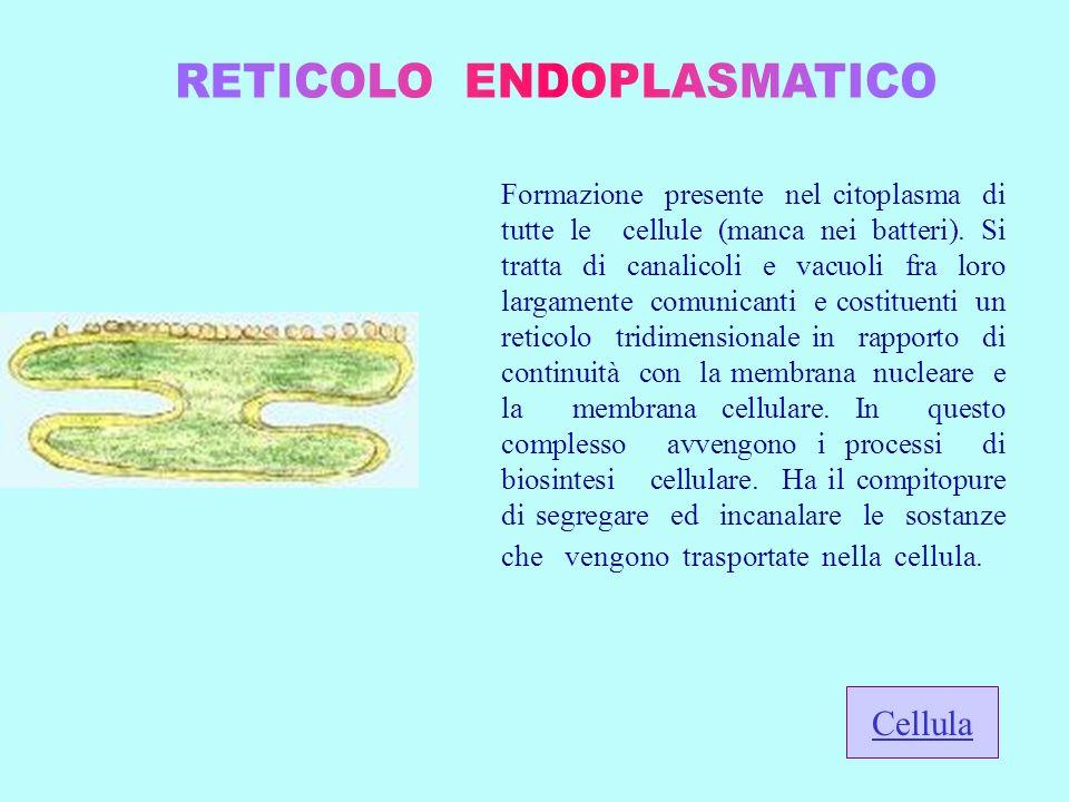 Formazione presente nel citoplasma di tutte le cellule (manca nei batteri). Si tratta di canalicoli e vacuoli fra loro largamente comunicanti e costit