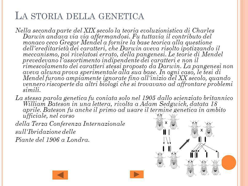 L A STORIA DELLA GENETICA Nella seconda parte del XIX secolo la teoria evoluzionistica di Charles Darwin andava via via affermandosi. Fu tuttavia il c