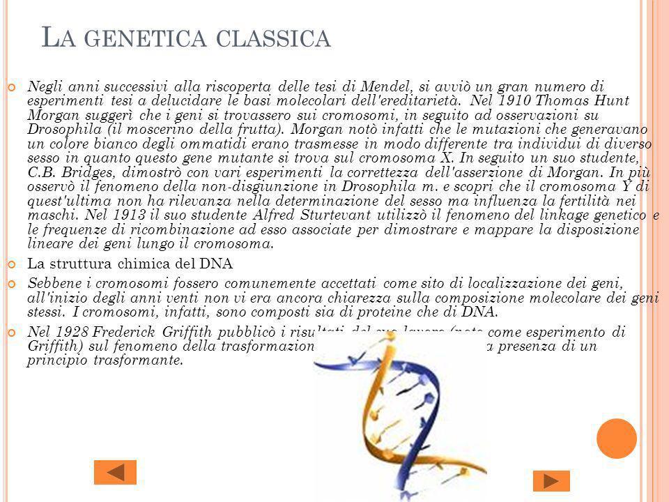 L A GENETICA CLASSICA Negli anni successivi alla riscoperta delle tesi di Mendel, si avviò un gran numero di esperimenti tesi a delucidare le basi mol