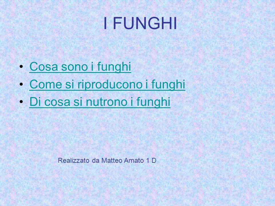 I FUNGHI Cosa sono i funghi Come si riproducono i funghi Di cosa si nutrono i funghi Realizzato da Matteo Amato 1 D