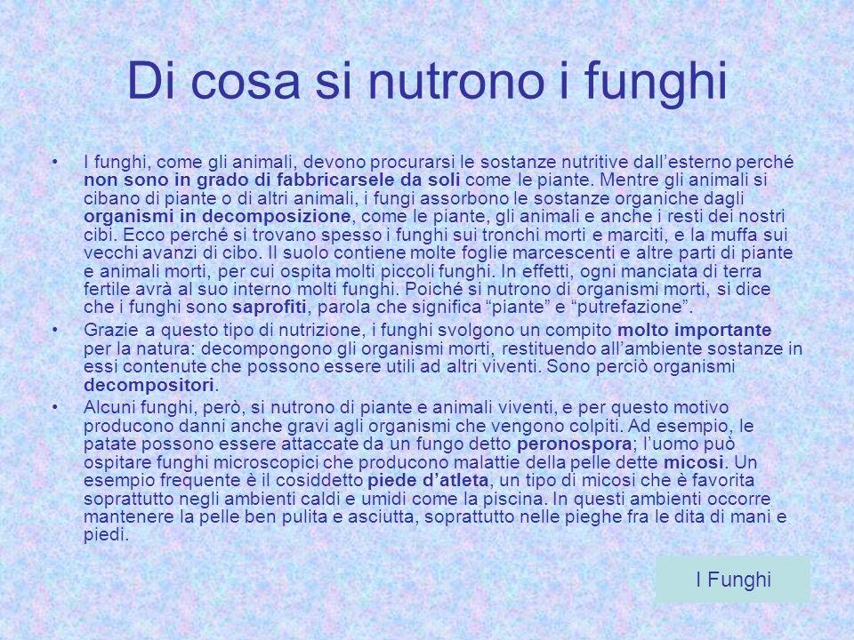 Di cosa si nutrono i funghi I funghi, come gli animali, devono procurarsi le sostanze nutritive dallesterno perché non sono in grado di fabbricarsele