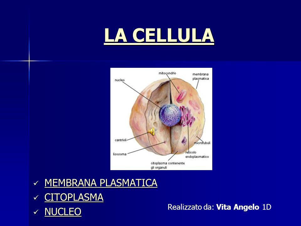 LA CELLULA LA CELLULA MEMBRANA PLASMATICA MEMBRANA PLASMATICA MEMBRANA PLASMATICA MEMBRANA PLASMATICA CITOPLASMA CITOPLASMA CITOPLASMA NUCLEO NUCLEO N