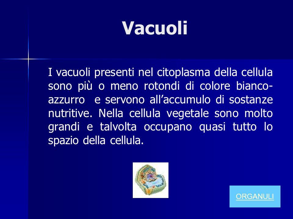 Vacuoli I vacuoli presenti nel citoplasma della cellula sono più o meno rotondi di colore bianco- azzurro e servono allaccumulo di sostanze nutritive.