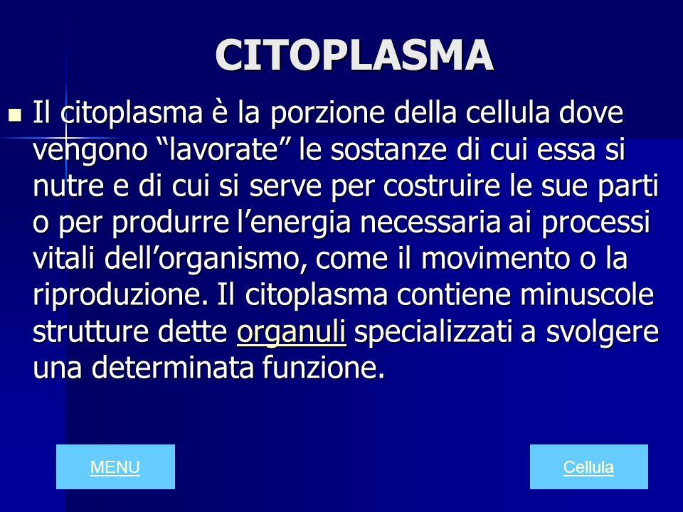 CITOPLASMA Il citoplasma è la porzione della cellula dove vengono lavorate le sostanze di cui essa si nutre e di cui si serve per costruire le sue par